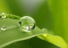 L'eau est une molécule derrière laquelle se cache une Mère
